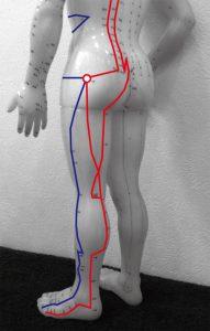 下肢の経絡